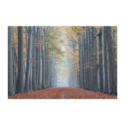 Картина на стекле Signal Деревья II