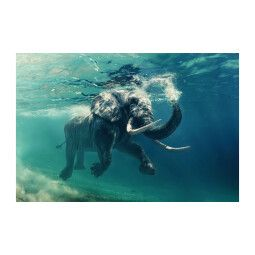 Картина на стекле Signal Слон