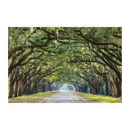 Картина на стекле Signal Деревья I